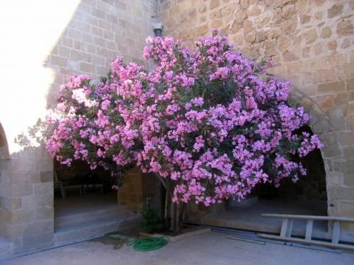 Bilder vom Kloster Deyrulzafaran bei Mardin