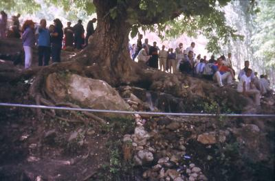 Die Quelle ist unter der Wurzel des Baumes