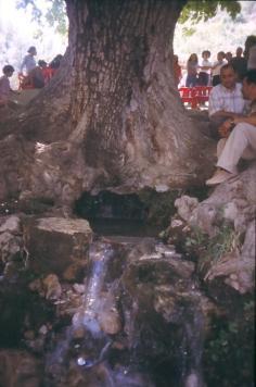 Der Mittelpunkt des Dorfes: Ein großer Baum mit einer Quelle