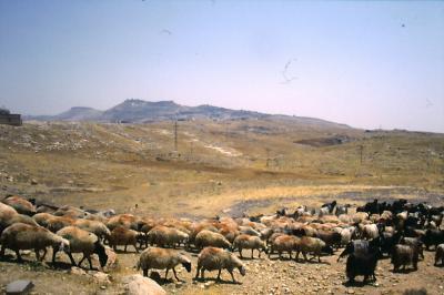 Im Hintergrund: Mardin