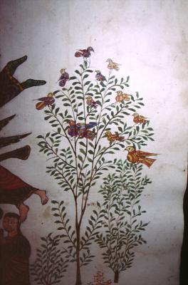 Auschnitt aus einem Bild - Evangeliar in Idil 1881 n. Chr.