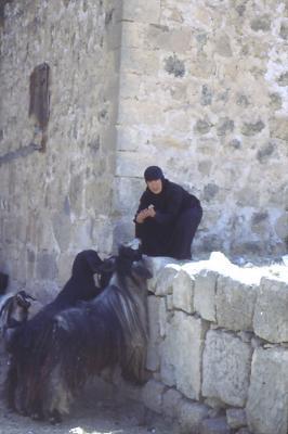 Eine Schwester schaut nach den Ziegen