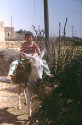 Der Esel - Reittier u. Lasttier